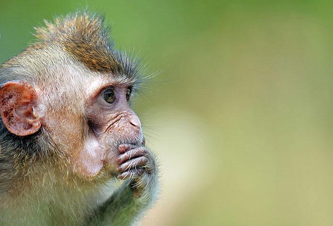 25 de animale haioase din 2013 in fotografii - Poza 11