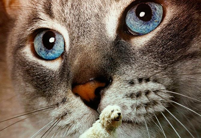 25 de animale haioase din 2013 in fotografii - Poza 12
