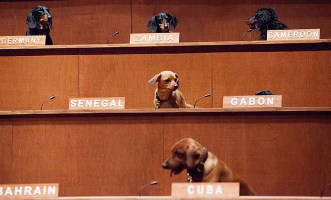 25 de animale haioase din 2013 in fotografii - Poza 15
