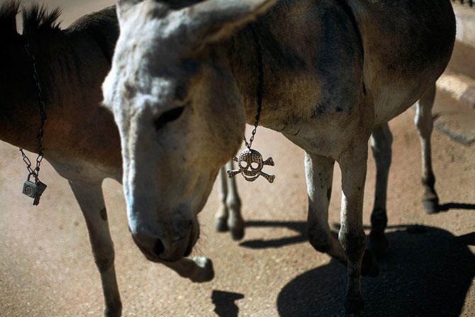 25 de animale haioase din 2013 in fotografii - Poza 19