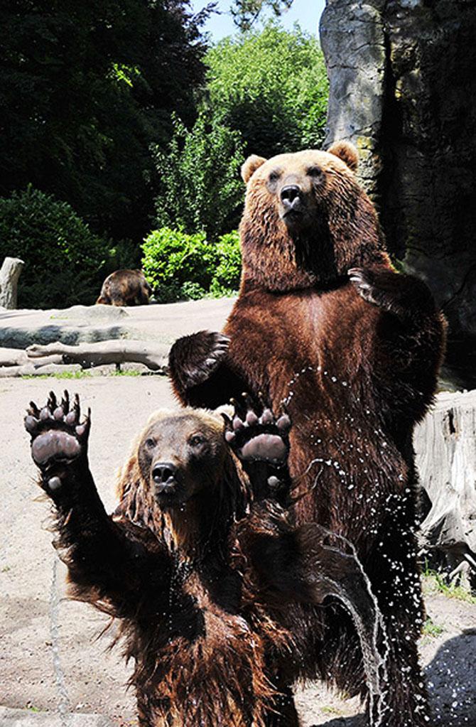 25 de animale haioase din 2013 in fotografii - Poza 20