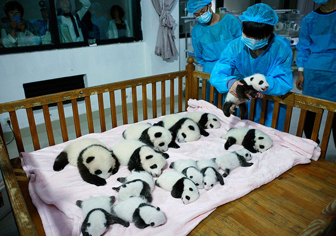 25 de animale haioase din 2013 in fotografii - Poza 22