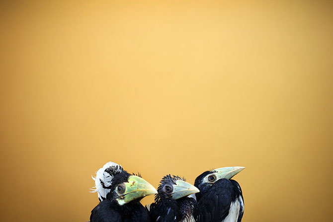 25 de animale haioase din 2013 in fotografii - Poza 24