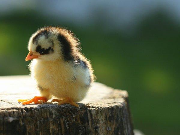 Atentie: Animale simpatice in 45 de poze! - Poza 10