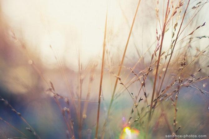 Culorile dau viata lumii lui Christopher Wesser - Poza 8