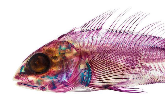 Culorile anatomiei pestilor, de Adam Summers - Poza 2