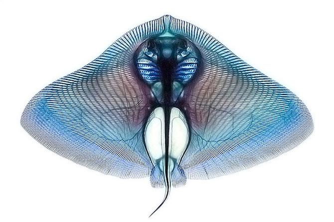 Culorile anatomiei pestilor, de Adam Summers - Poza 7