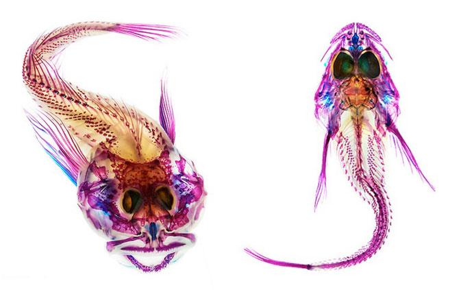Culorile anatomiei pestilor, de Adam Summers - Poza 8