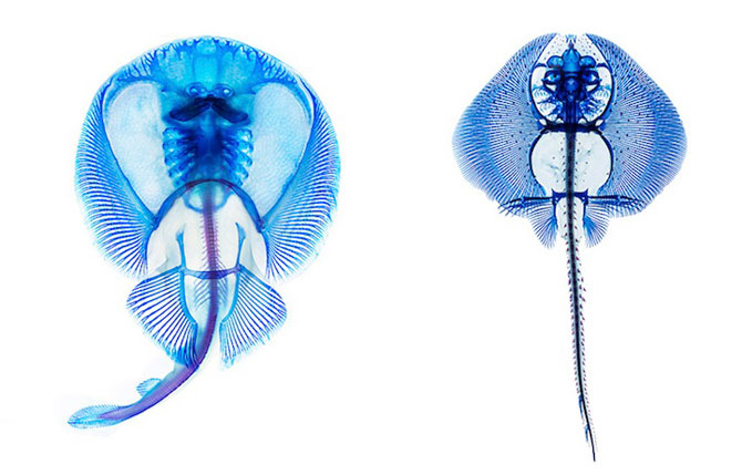 Culorile anatomiei pestilor, de Adam Summers