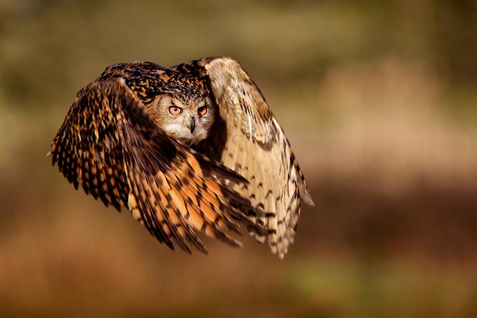 Viitoarele vedete National Geographic - Poza 4
