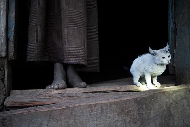 Viitoarele vedete National Geographic - Poza 16