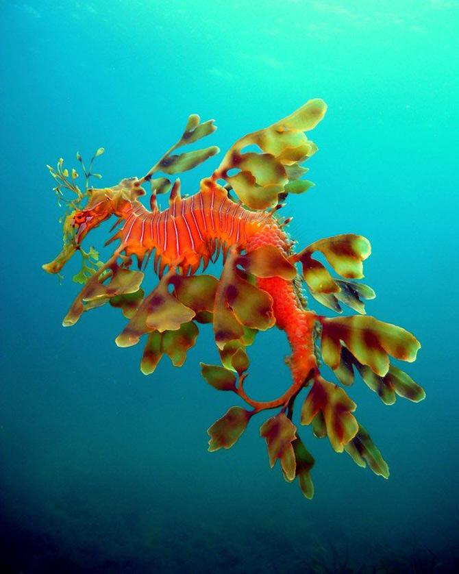 National Geographic da lectii de frumusete naturala - Poza 9