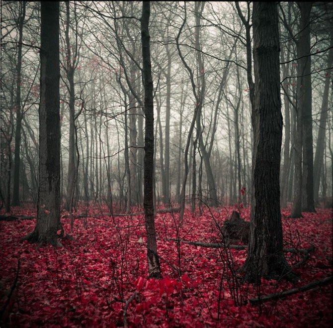 National Geographic da lectii de frumusete naturala - Poza 10