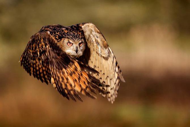 National Geographic da lectii de frumusete naturala - Poza 11