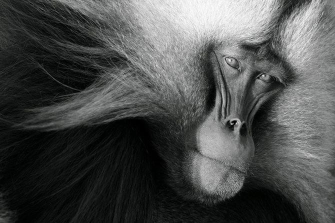National Geographic da lectii de frumusete naturala - Poza 14