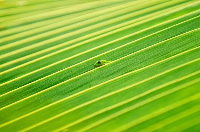 National Geographic da lectii de frumusete naturala - Poza 16