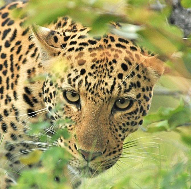 National Geographic da lectii de frumusete naturala - Poza 20