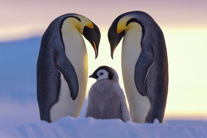 National Geographic da lectii de frumusete naturala - Poza 23