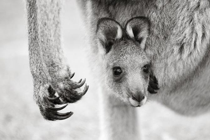 National Geographic da lectii de frumusete naturala - Poza 25