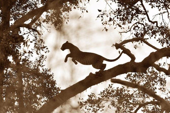 National Geographic da lectii de frumusete naturala - Poza 27
