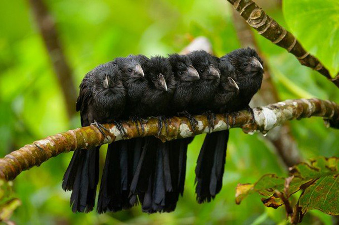 National Geographic da lectii de frumusete naturala - Poza 28