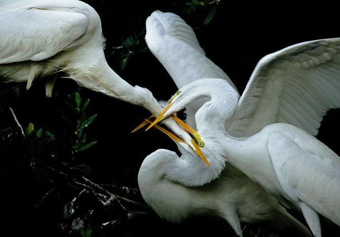 National Geographic da lectii de frumusete naturala - Poza 30