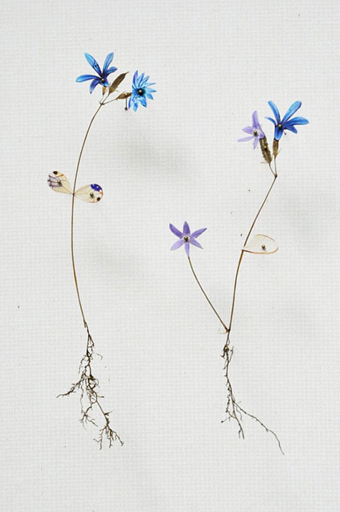 Constructii din flori reciclate de Anne ten Donkelaar - Poza 11