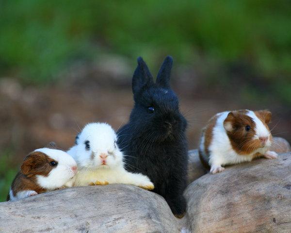 Atentie: Animale simpatice in 45 de poze! - Poza 11