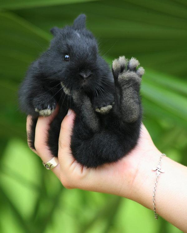Atentie: Animale simpatice in 45 de poze! - Poza 12