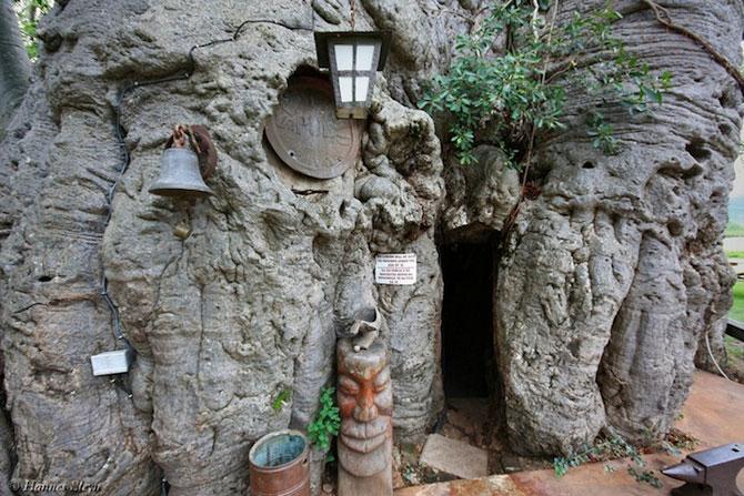 Barul din baobabul batran de 6.000 de ani - Poza 3