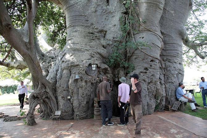 Barul din baobabul batran de 6.000 de ani - Poza 5