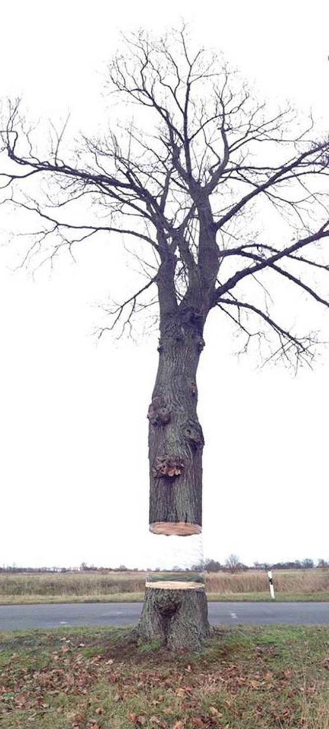 Iluzie optica: Un copac plutitor in Germania - Poza 1