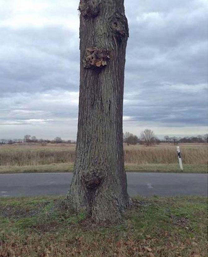 Iluzie optica: Un copac plutitor in Germania - Poza 2