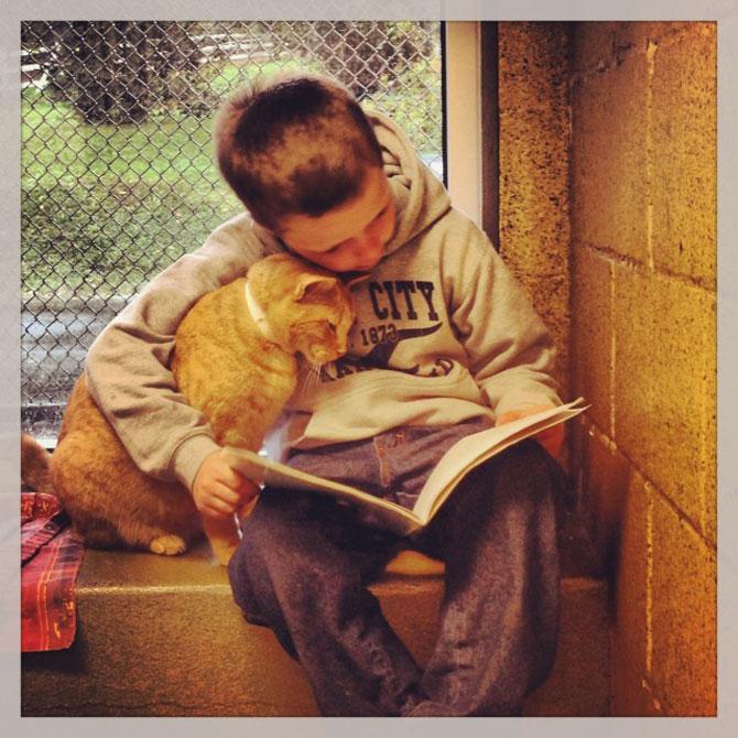 Copiii le citesc pisicilor fara adapost - Poza 1