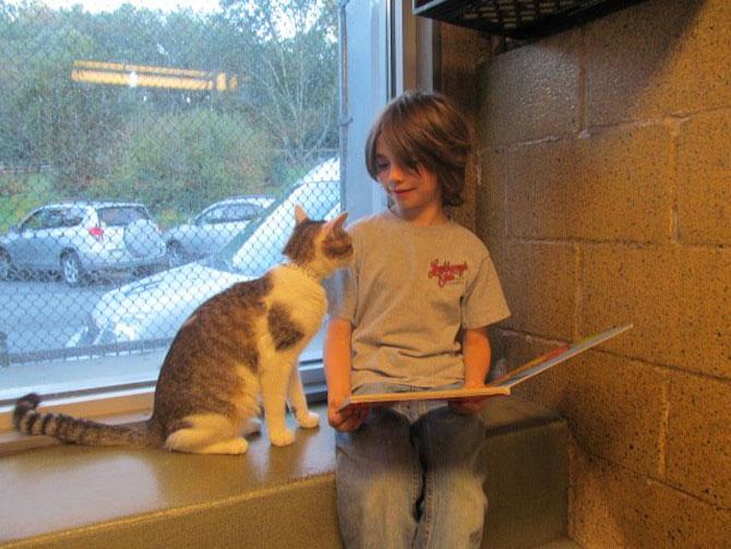 Copiii le citesc pisicilor fara adapost - Poza 2