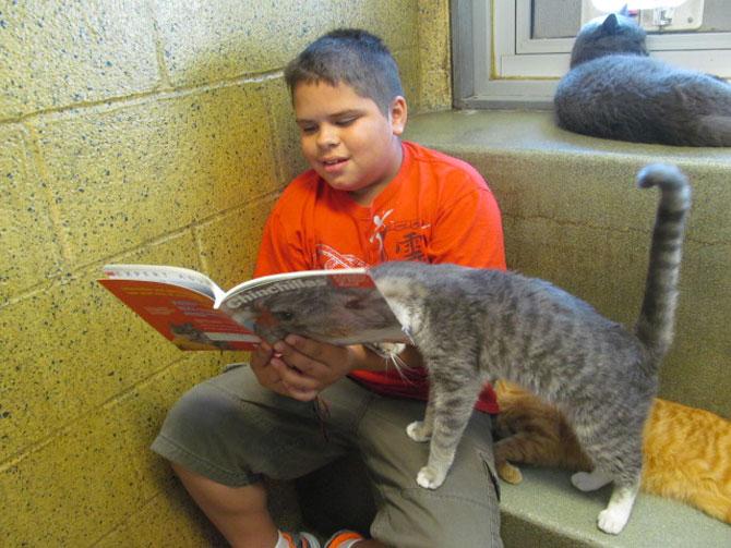 Copiii le citesc pisicilor fara adapost - Poza 4