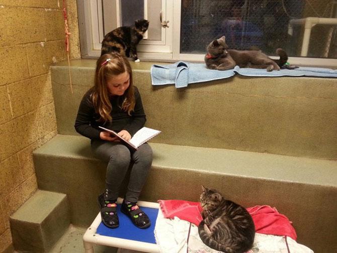 Copiii le citesc pisicilor fara adapost - Poza 5