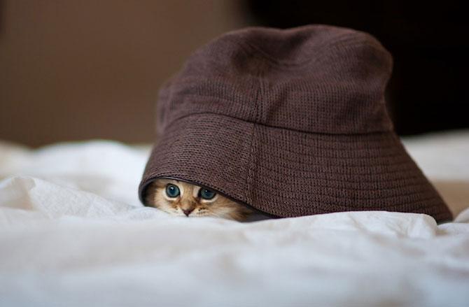 Ben Torode e proprietarul celei mai dragute pisici din lume - Poza 2