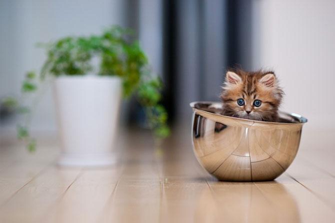 Ben Torode e proprietarul celei mai dragute pisici din lume - Poza 3