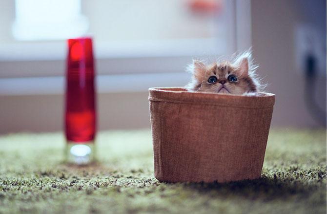 Ben Torode e proprietarul celei mai dragute pisici din lume - Poza 5