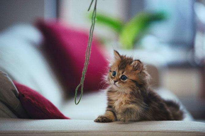 Ben Torode e proprietarul celei mai dragute pisici din lume - Poza 6