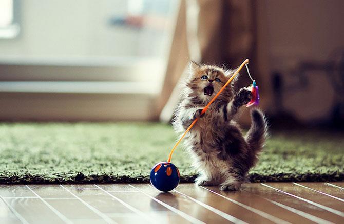 Ben Torode e proprietarul celei mai dragute pisici din lume - Poza 7