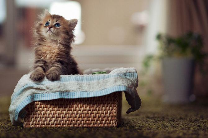 Ben Torode e proprietarul celei mai dragute pisici din lume - Poza 8