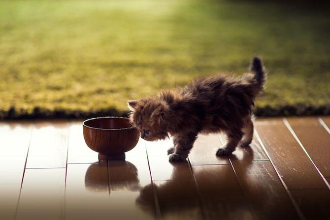 Ben Torode e proprietarul celei mai dragute pisici din lume - Poza 9