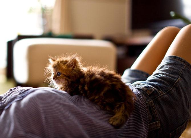 Ben Torode e proprietarul celei mai dragute pisici din lume - Poza 10