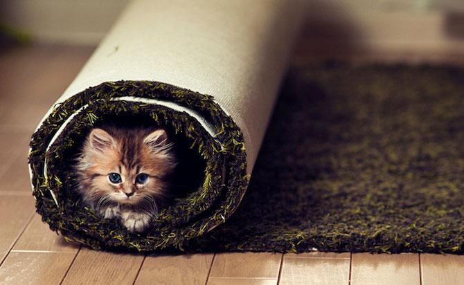 Ben Torode e proprietarul celei mai dragute pisici din lume - Poza 11