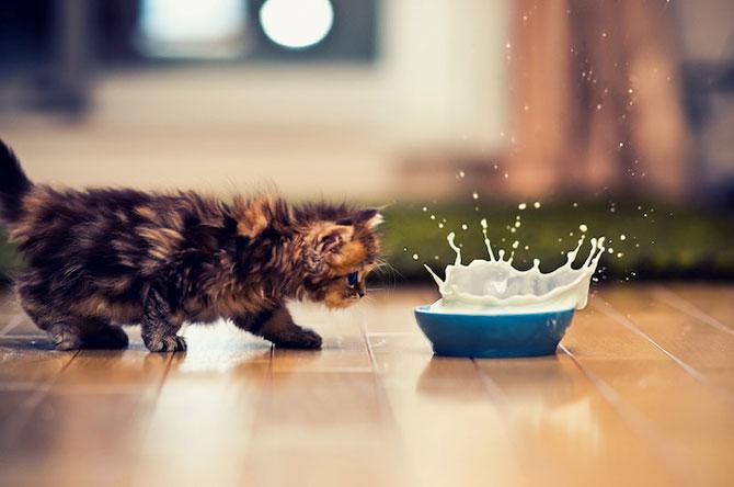 Ben Torode e proprietarul celei mai dragute pisici din lume - Poza 12