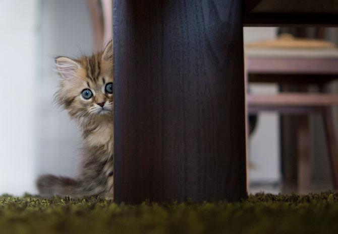 Fotografii pisica Ben Torode