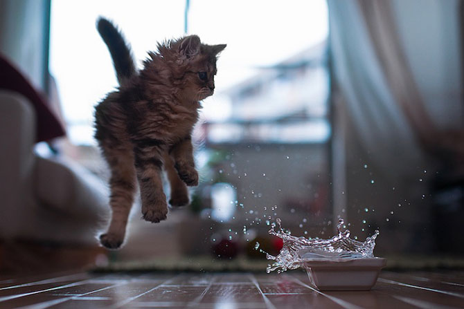 Ben Torode e proprietarul celei mai dragute pisici din lume - Poza 14