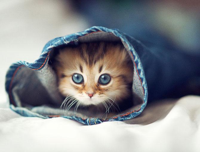 Ben Torode e proprietarul celei mai dragute pisici din lume - Poza 16